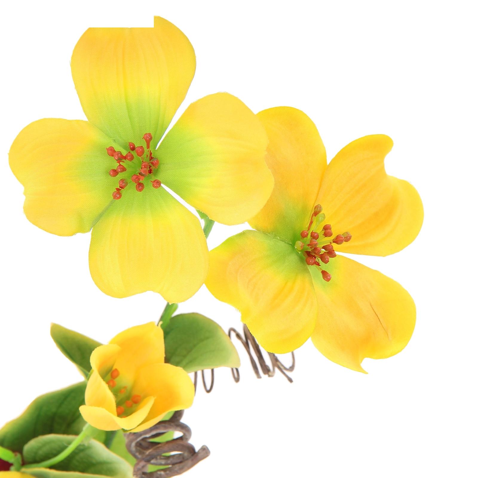 Клематис желтый цветов